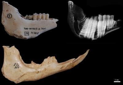 Credit: Institut Català de Paleontologia Miquel Crusafont